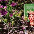 """""""Viva la Vida """" di Pino Cacucci: Una doppia finestra sulla vita di Frida Kahlo"""