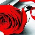 Vogliamo anche le rose, oggi conferenza a Palazzo della Marra