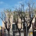 Potature «inappropriate» a Barletta, «il verde pubblico non è uno spot»