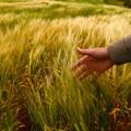 Maltempo, gli agricoltori possono segnalare i danni all'Ufficio Agricoltura