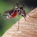 Avviati trattamenti contro zanzare e mosche a Barletta