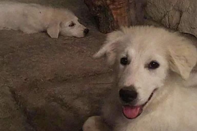 Smarriti due cuccioli inseparabili in zona Barberini