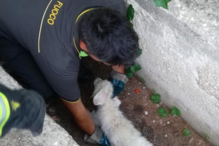 Abbandonato sulla SS93 di Barletta, salvato un cucciolo di cane