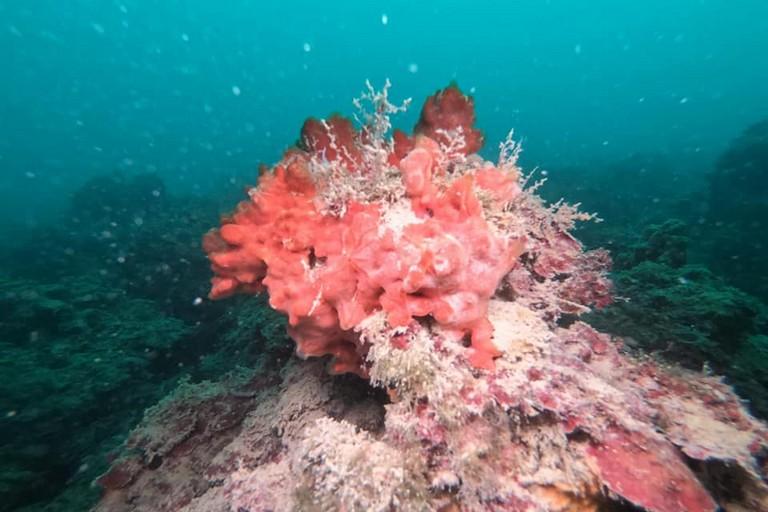 Immersione mare Barletta Legambiente