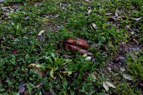 Deiezioni canine ai giardini De Nittis