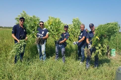 Piantagione di marijuana a Barletta, in azione la Polizia di Stato