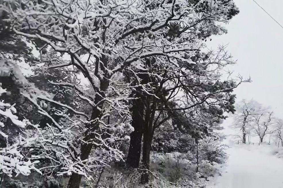 Neve su Spinazzola