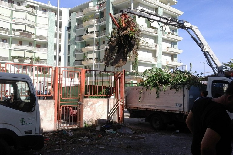 rimozione vegetazione