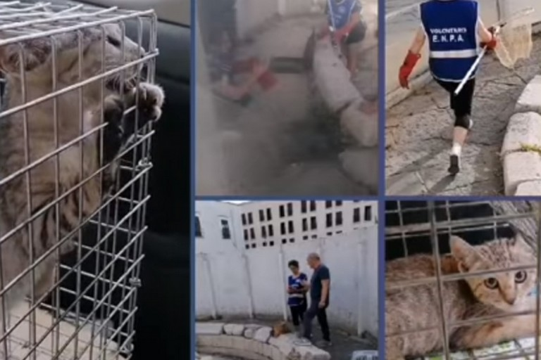 Salvati i gattini dalla fontana di Piazza Marina