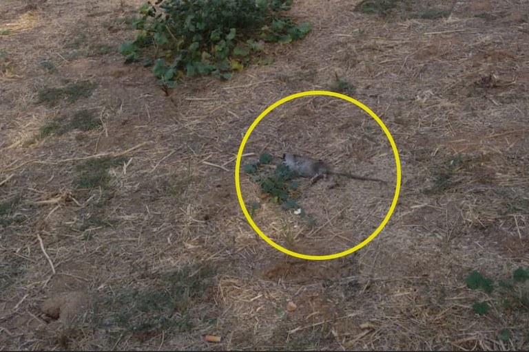 Topo morto al Parco dell'Umanità