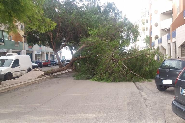 Un albero blocca la strada in via Paisiello